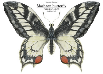 Watercolor illustration Machaon butterfly