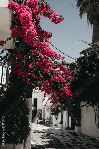 Big Pink Flower Bush On Street Stock Photo And Royalty Free Images