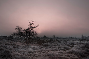 Hint of pink in the fog over this frost covered landscape at dawn
