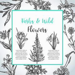 Background with Hand drawn herbs and wild flowers Vintage collection of Plants Floral invitation Vector illustrations in sketch