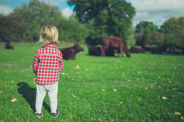 Little toddler looking at cows