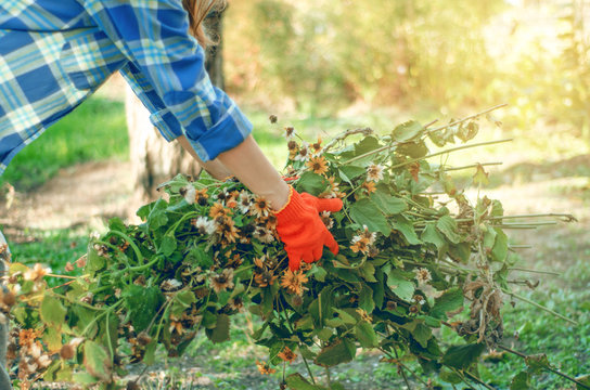 Woman gardener cleans branches leaves in the garden sun nature