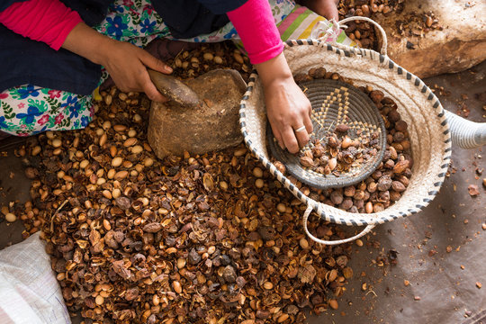 Close-up of hands of Moroccan women breaking Argan nuts (Argania spinosa) in cooperative in Morocco. This Moroccan fruit is widely used in cooking and mainly in the cosmetics industry.