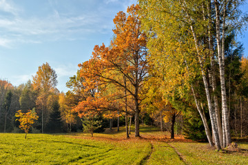 Warm autumn scenery in a forest, with the sun rays of light