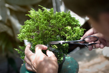 Printed kitchen splashbacks Bonsai Making of bonsai trees. Handmade accessories wire and scissor bonsai, bonsai tools, stand of bonsai.