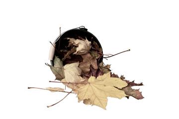Ahornblätter fallen aus einem Eimer