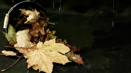 schönes, abstraktes Hintergrundbild mit Ahornblättern in einem Eimer, Wasser und dunklen Blättern