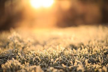 Frostiges Gras von der Sonne beleuchtet Fotoväggar