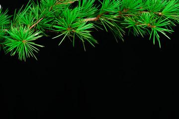 Christmas tree and ornament