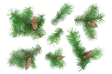 Fir tree branch with cones isolated on white background. Christmas background. Top view