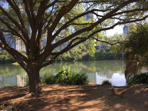 A tree along an urban river