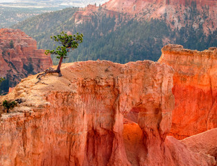 Small Cedar Tree Growing on Narrow Sandstone Ledge
