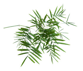 bamboo isolated on gray background with clipping path