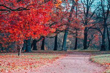 Printed roller blinds Brick Fantasy scene of red foliage and path in an autumn park.
