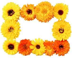 calendula, frame of flowers, beautiful frame of flowers