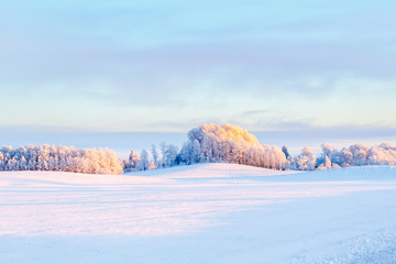Wintry landscape with frosty trees at a field