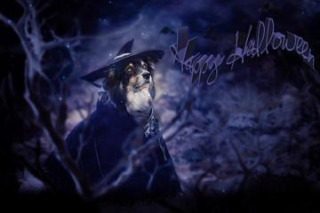 Halloween mit Hund