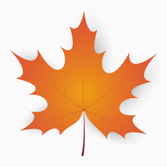 Maple leaf. Autumn realistic leaf with shadow. Vector illustration.
