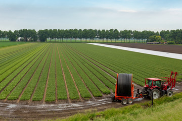 Red tractor with irrigation system to spray a flower bulb field in Abbenes the Netherlands.