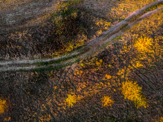 Aerial top down: Beautiful autumn trees in yellow, orange and red forest on sunny autumn day.