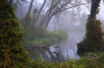 Drzewa nad rzeką