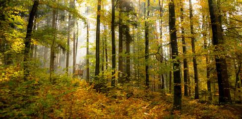 Wald und Jägerhaus
