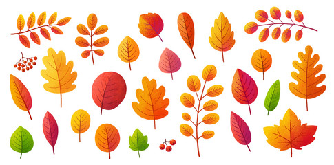 Bright colors textured autumn leaves vector set isolated on white background