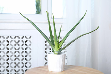 Potted aloe vera plant on table in room