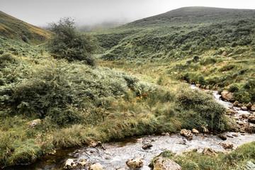 Foto auf AluDibond Fluss beautiful river in mountain pass Iraty, irau, basque country, france