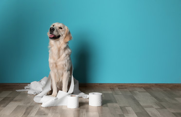 Cute dog playing with rolls of toilet paper on floor against color wall. Space for text Wall mural