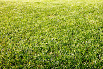 Park with grass as texture/background