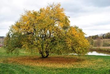 Drzewo jesienne