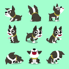 Vector cartoon character cute boston terrier dog poses set for design.