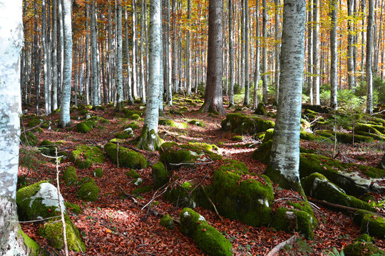 the colors of the autumn forest