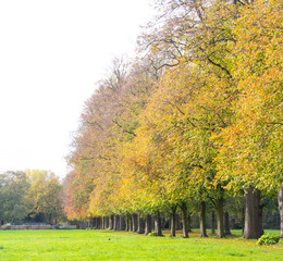 Golden avenue of trees