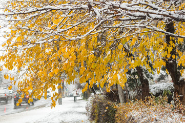 The end of autumn, the coming of winter in the city