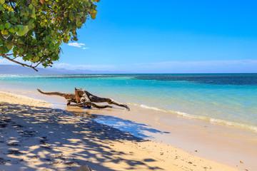 Caribbean Beach With Driftwood At Playa La Ensenada Dominican Republic