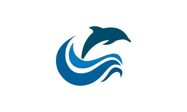 attractive dolphine in the sea