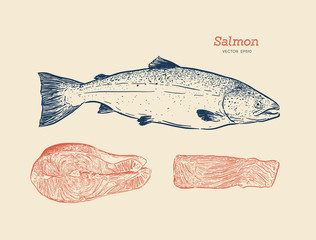 Ink sketch of salmon. Hand drawn vector illustration of fish