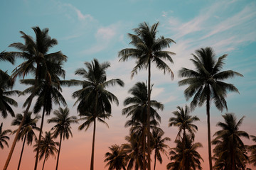 Coconut palm trees - Tropical summer breeze holiday, Vintage tone effect