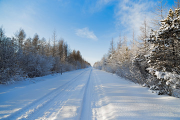 Straight road in the winter forest