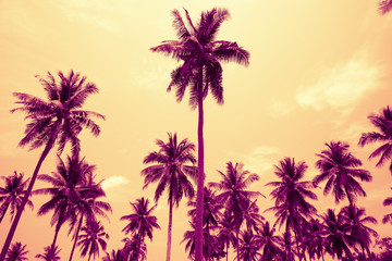 Coconut palm trees in sunny day - Tropical aloha summer breeze holiday vacation concept, Color tone effect