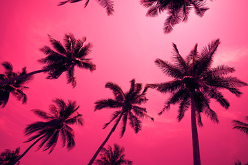 Coconut palm trees - Tropical summer breeze holiday, Color fun tone