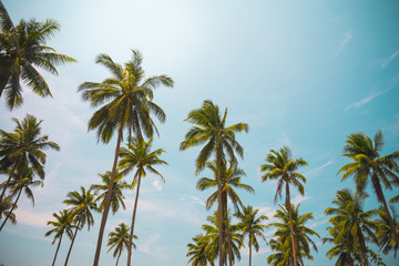 Coconut palm trees in sunny day - Tropical aloha summer beach holiday vacation concept, Color fun tone