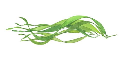 watercolor beautiful seaweed