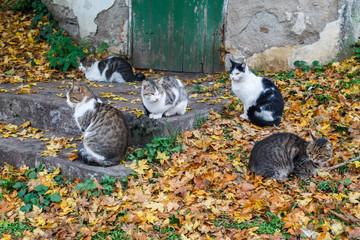 Several cats gathered on the steps of the old building