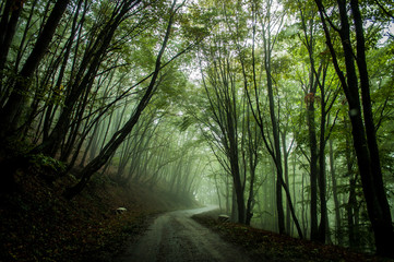Steep road in Ai Petri mountains, Crimea, Russia. Sunlight falls throught the trees in autumn forest.