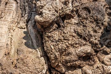 Tree stump wood background