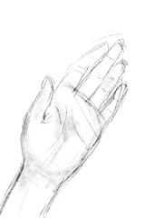digital illustration of a woman's left hand on white background