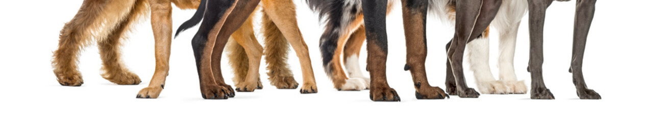 dog paws, in front of white background